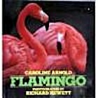 Flamingo by Caroline Arnold