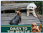 Daisy to the Rescue by Michele Dufresne