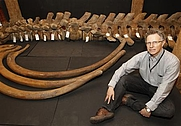 Author photo. Francis Grew, senior archaeology curator at the Museum of London, poses for a photo with the bones of a North Atlantic right whale which were found in the river Thames at Greenwich, at the Museum of London Docklands, September 9, 2010.