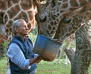Author photo. Peter Beard at Hog Ranch in 2014 feeding giraffes