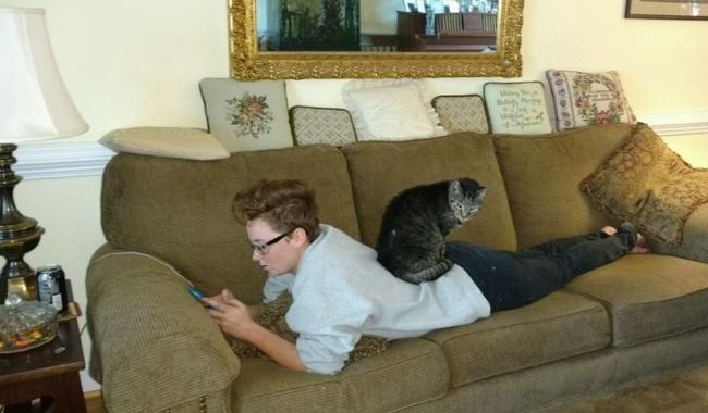 Cat Making Wheezing Noises